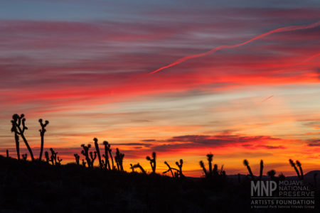 Mojave Happy Hour