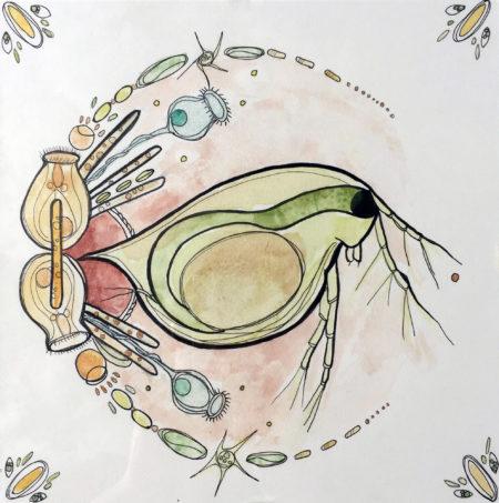 Water-Flea-Rondelle